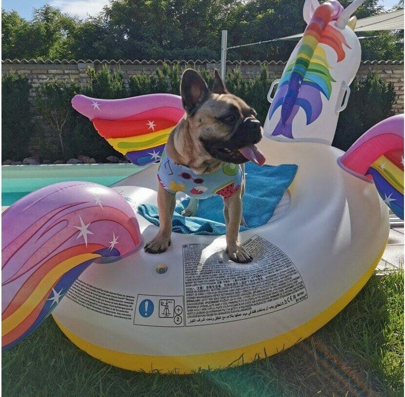 T-Shirt Rinfrescante Cool Bulldog
